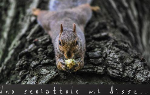 La simbologia degli animali nei viaggi: lo scoiattolo