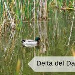 Il delta del Danubio da fare una volta nella vita