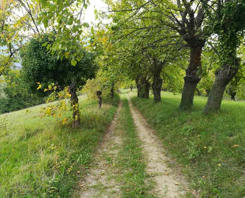 sentiero lugana