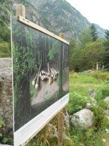 """""""L'anima del bosco. Uomini e foreste in Lombardia"""" - visita fotografica di Punto.Ponte 2"""