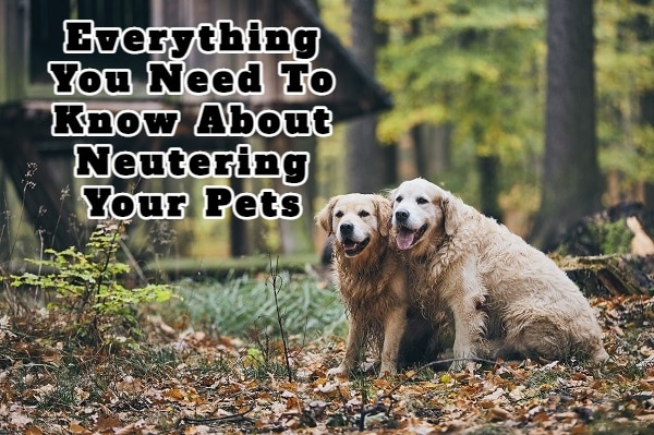 Everything You Need To Know About Neutering Your Pets