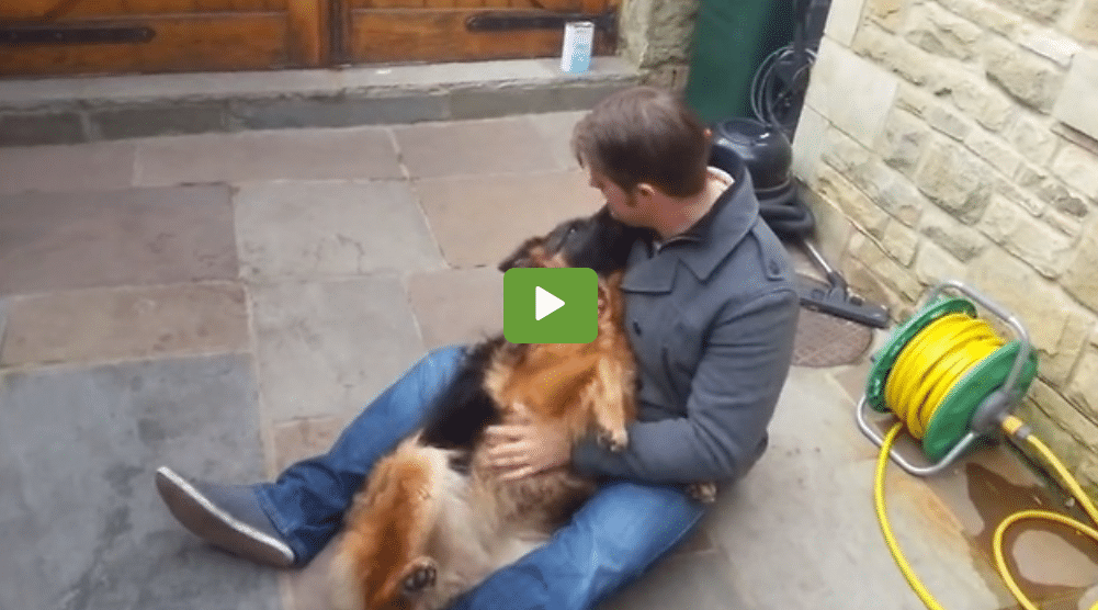 German Shepard Cries For Owner After Being Gone For Months