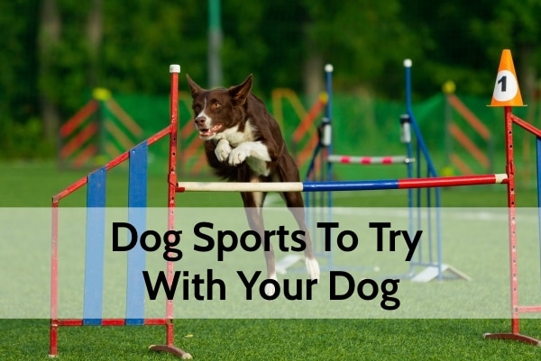 Dog Sports To Try With Your Dog