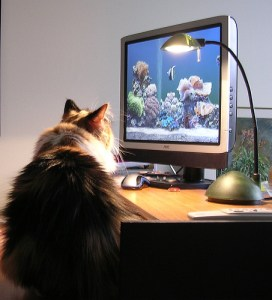 cat-at-computer