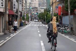 city-dog-riding-bike