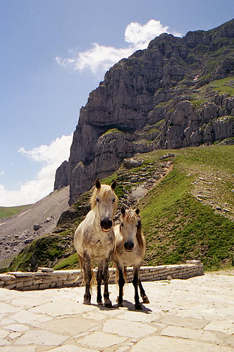 Cute funny horses - And here's Ranger and me on our honeymoon, going to breakfast at an all you can eat pasture.