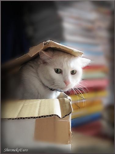 Cute cat pictures cat in a box
