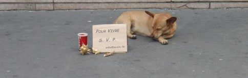 Cute dog picture Corgi on the street