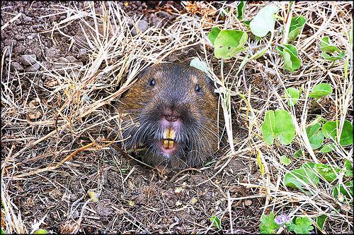 Funny Animal Pictures Gopher Underground