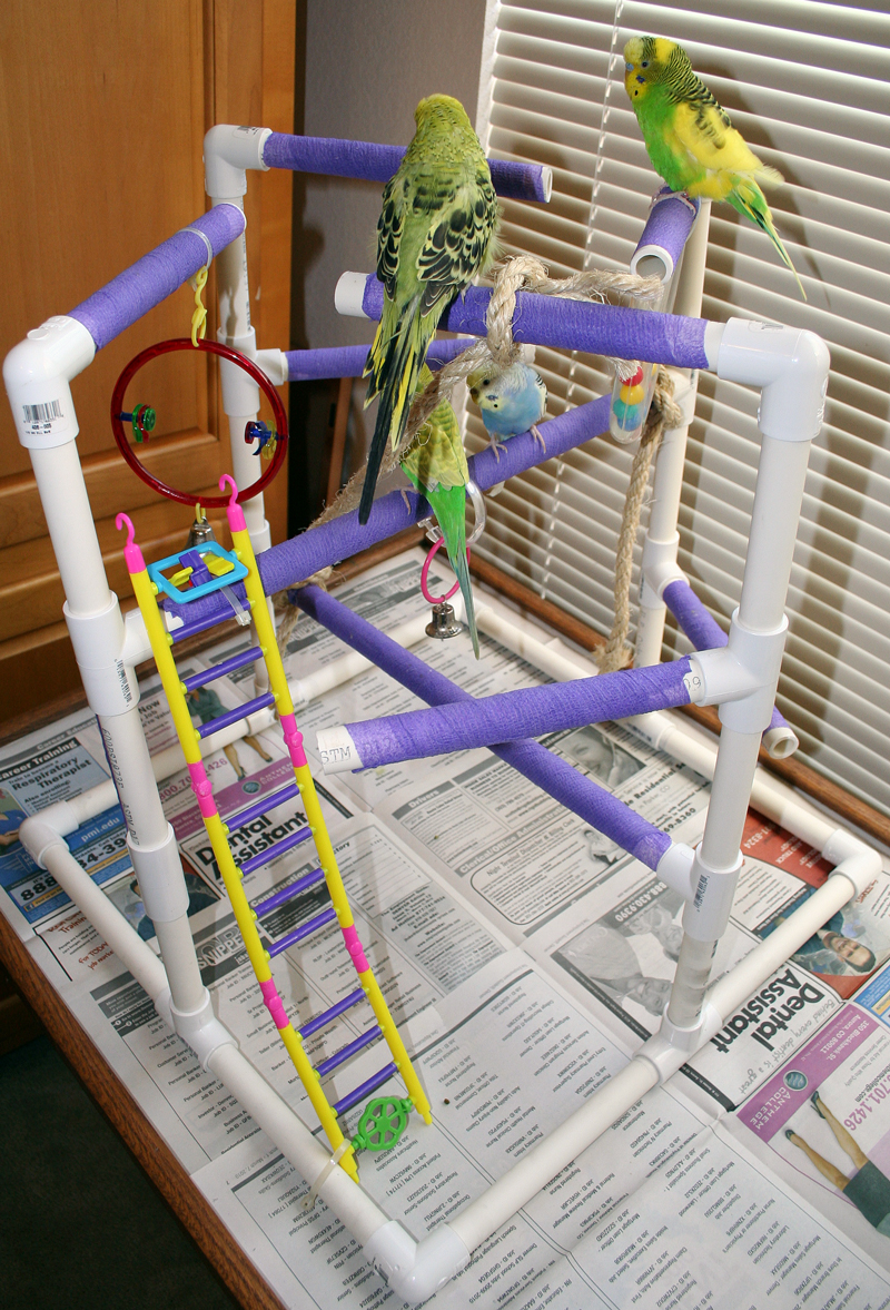 Budgie Parakeet And Parrot Playgyms Stands And Perches