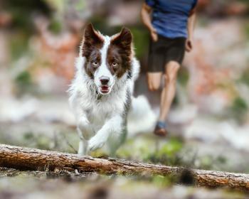 Perros de alto rendimiento físico