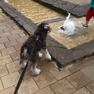 PuppyBeans(パピービーンズ) 6月14日 · . 今日の1枚は、公園の小さな噴水と、そこで遊ぶ元気なちびっこ達に押され気味のポルトをパチリ📷