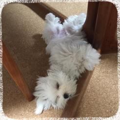 たくさんお勉強したアンディくん、疲れたようで寝ちゃいました(o^^o) うんうん、今日も頑張ったもんね♪