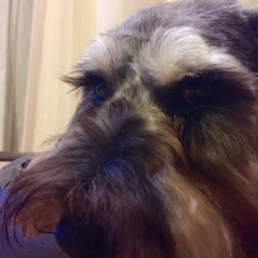 動物愛護って難しい? 自分のペットを責任持って大切にする、当たり前かもしれませんがこれも立派な、動物愛護です。 わたしは、いち飼い主だけでなく、トレーナーとして、飼い主さんとわんちゃんの笑顔を作れるように頑張ります! わんちゃんでお困りの飼い主さん、気軽にご連絡くださいね!成犬だって変わります♪