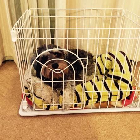 最近寒いですね!ポルトは最近、寒さ対策もあり同じ部屋で眠ることにしました。 今日はポルトのお休みサークルをパチリ。 サークルの高さは40センチとひくいですが柵には手をかけないルールがあるので安心です♪