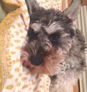今日はきりり!と耳が立ったポルトをパチリ、したくて寝ている写真の向きを変えてみました(o^^o) いつも耳のマッサージをするついでに、耳の内側の汚れや匂いをチェックしています。 プチ健康チェックをする習慣をつけると、ペットの体調の変化にはやく気づけるのでオススメします♪