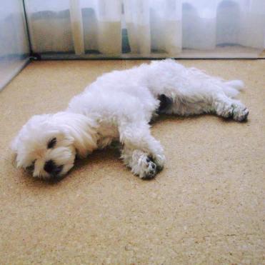 たくさんお勉強して、眠ってしまったなつめちゃんをパチリ。 お教室でもリラックスしています(*^^*)♪