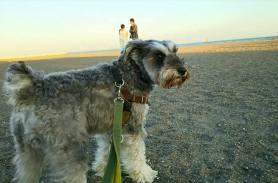秋の海でパチリ。私が外出している間に、砂浜でダッシュしたようです。 歩きにくい砂浜で、足腰の筋力を鍛えるポルトです(*^^*)