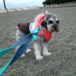 お気に入りの海の公園でひとりぼっちのポルトをパチリ。 雪が心配されていますので、お散歩や外出な際には足元に十分にお気をつけください。 また、車のタイヤにチェーンを巻くと、運転中の音が変わり緊張するわんちゃんもいます。注意してあげてくださいね(*^-^*)