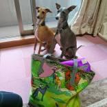 ビビちゃん&スリちゃん、わたしのバッグのわんことパチリ。 ふたりともキリリっ!なポーズです(^-^)