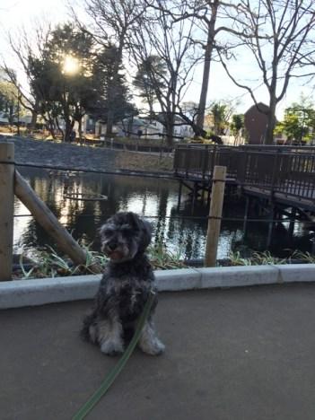今回は品川区のわんちゃんOKの公園、「文庫の森」をご紹介します。知らなかったのですが災害対策がしっかりされている公園でした。http://puppybeans.tokyo/2015/01/23/osanpo/