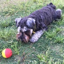 今日も暑かったですね〜! 今日はすこし涼しくなった夕方に原っぱでボール遊びしました♪