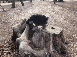 ブログ更新しました♪今回のブログは、品川区と目黒区の境にある、「林試の森公園」をレポートします。 自然が大好きなふじさき、しっかり癒されました(^∇^) https://puppybeans.tokyo/2015/03/03/rinshinomori/