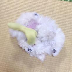 お気に入りのおもちゃで遊ぶなつめちゃんをパチリ。 ☆お顔はどこかな。