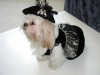 midnite designer dog apparel