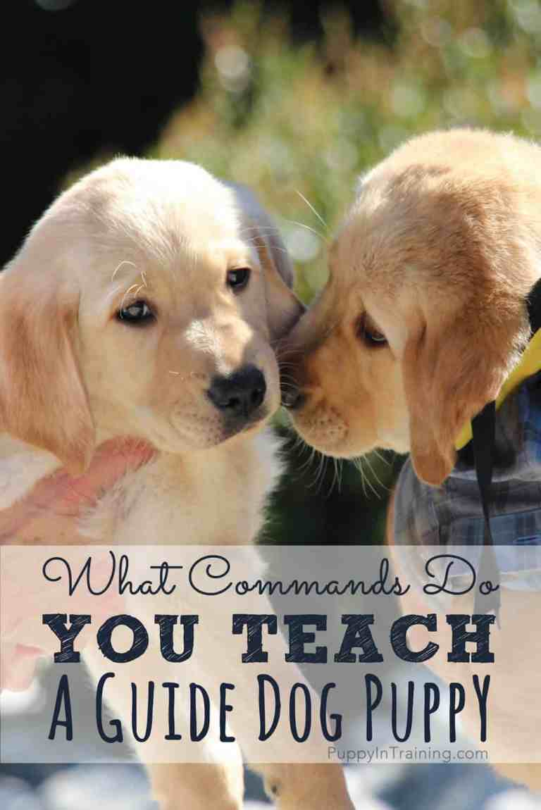 6 Best Dog Training Tips That You Must Know