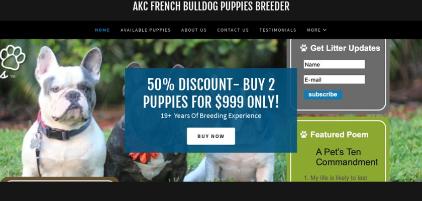 Review Of Akcfrenchbulldogpuppiesbreederclub Puppyscamcom