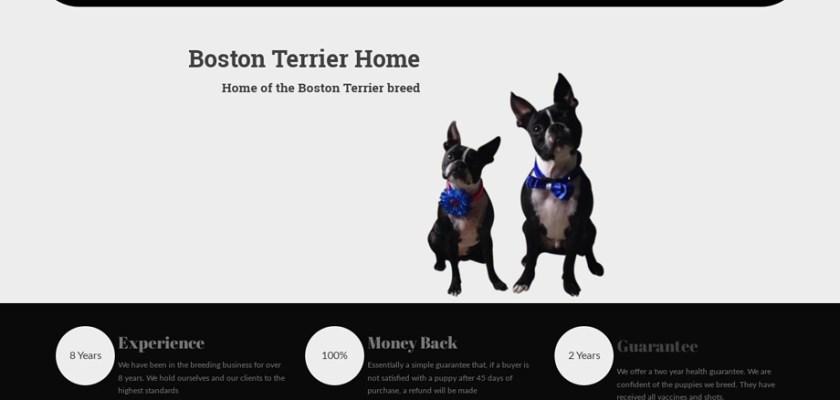 Bostonterrierhome.com - Dachshund Puppy Scam Review