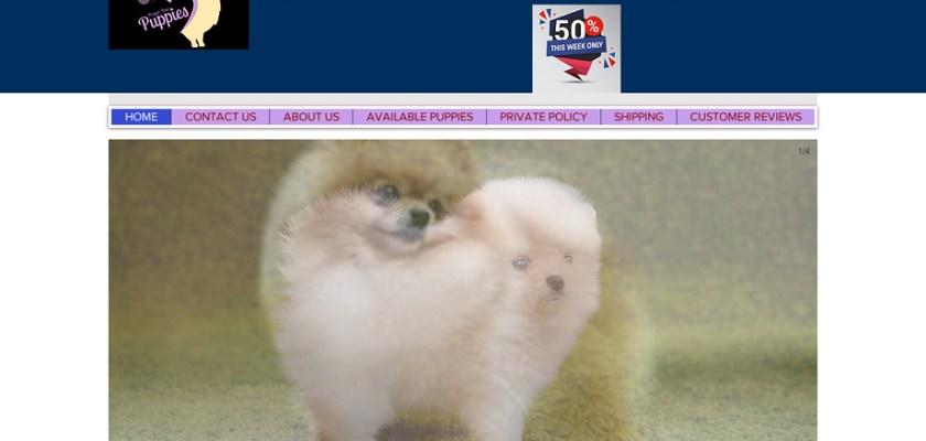 Jovialpomeranians.com - Pomeranian Puppy Scam Review