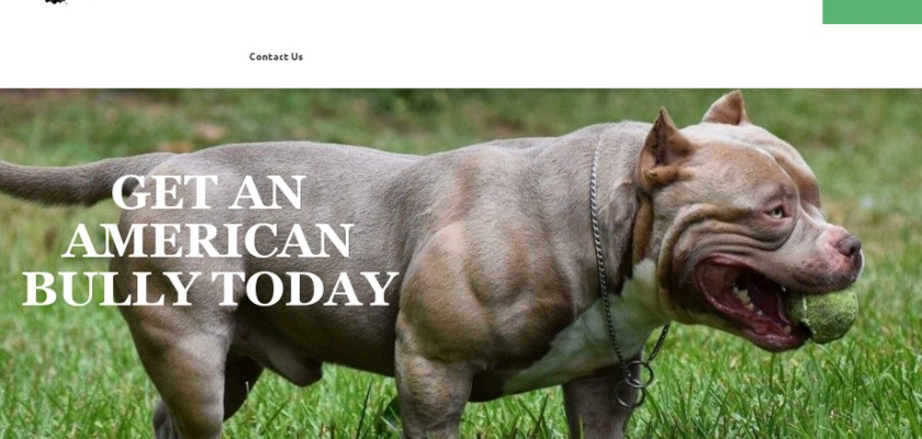 Standardamericanbullybreeder.com - Pit Bull Puppy Scam Review