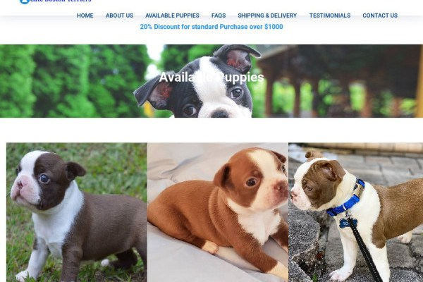 Cutebostonterriers.com - Boston Terrier Puppy Scam Review