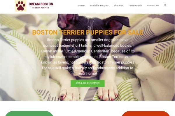 Dreambostonterrierpuppies.com - Boston Terrier Puppy Scam Review