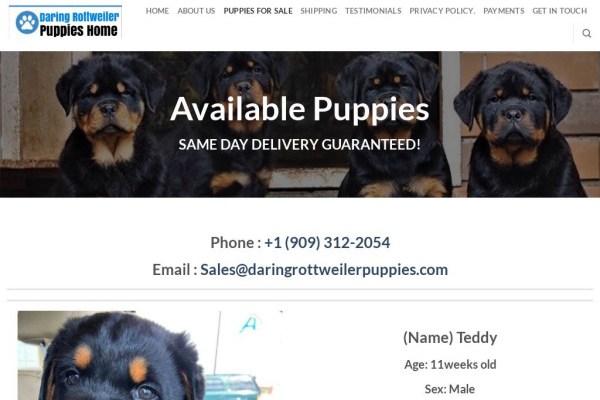 Daringrottweilerpuppies.com - Great Dane Puppy Scam Review