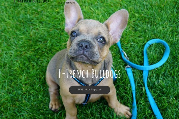 F-frenchbulldogs.com - French Bulldog Puppy Scam Review