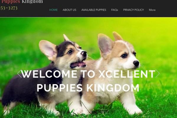 Xcellentpuppieskingdom.com - Corgi Puppy Scam Review