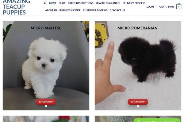 Amazingteacuppuppies.com - Yorkshire Terrier Puppy Scam Review