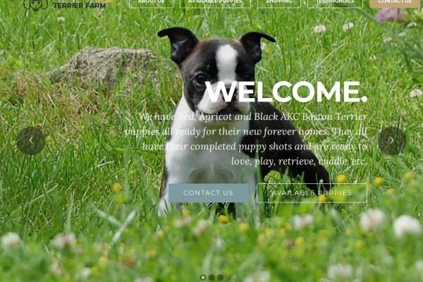 Bostonterriersfarms.com - Boston Terrier Puppy Scam Review
