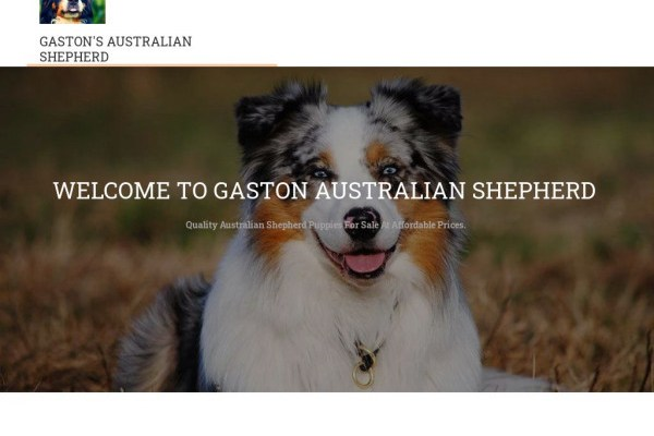 Gastonaussiehome.com - Germanshepherd Puppy Scam Review