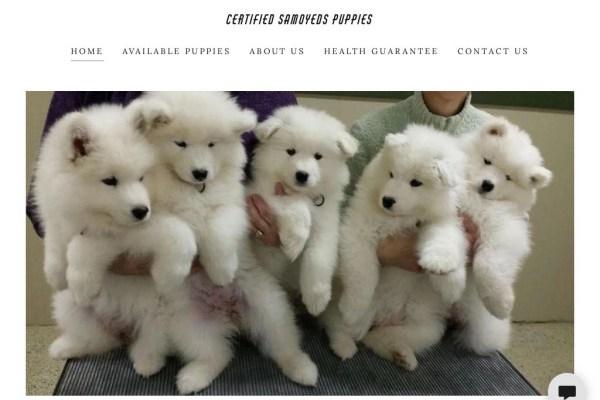 Samoyedspuppies.com - Samoyed Puppy Scam Review