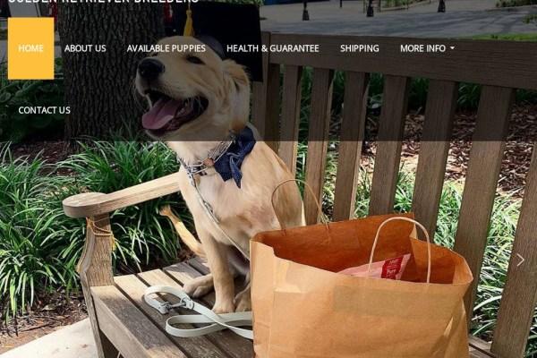 Adorablegoldenretrieverbreeders.com - Golden Retriever Puppy Scam Review