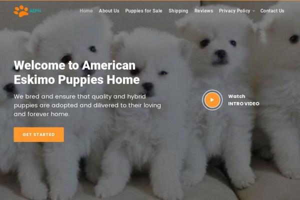 Americaneskimopuppy.com - Husky Puppy Scam Review