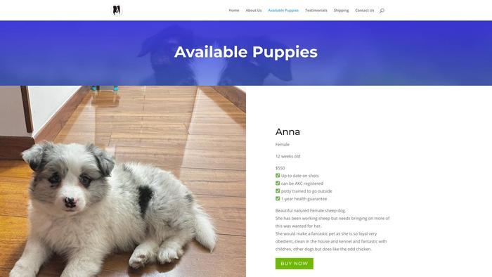 Masonbordercolliehome.com - Bordercollie Puppy Scam Review