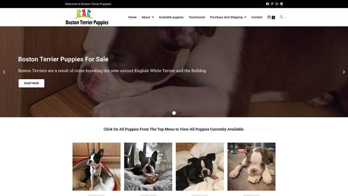 Cutebostonterrier.com - Boston Terrier Puppy Scam Review
