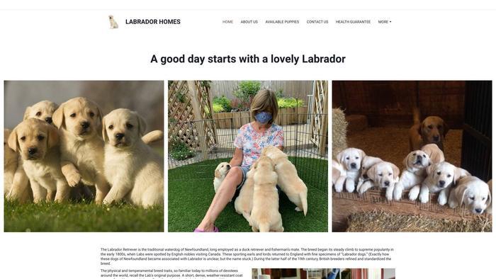 Labradorhomes.net - Labrador Puppy Scam Review