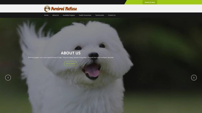 Purebredmaltesehome.com - Maltese Puppy Scam Review