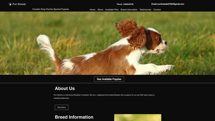 Purrbreedcavalierkc.com - Cavalier King Charles Spaniel Puppy Scam Review